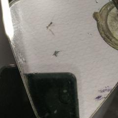 Ремонт лобового стекла Skoda Octavia